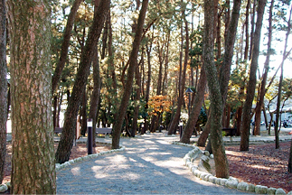 松林の遊歩道